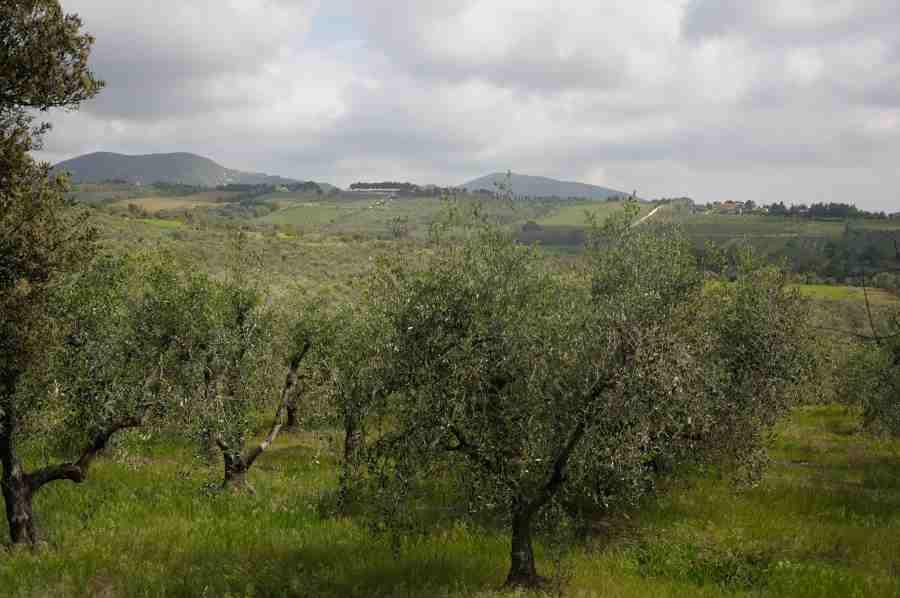 Blog tour un mare di gusto: gli olivi