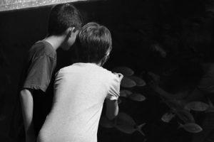 acquario di livorno - piccoli visitatori